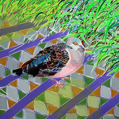 [A0017-0050] 비둘기