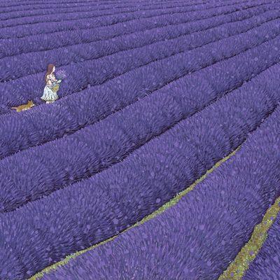 [A0027-0089] 라벤더 풍경 2