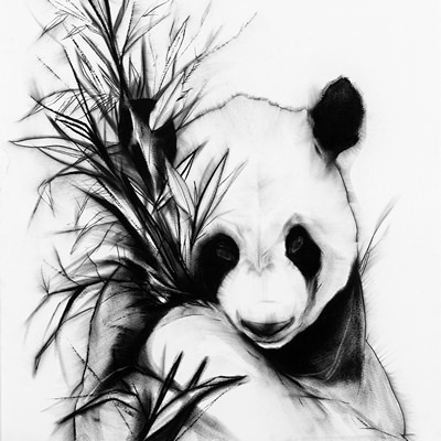 [A0037-0013] The Panda