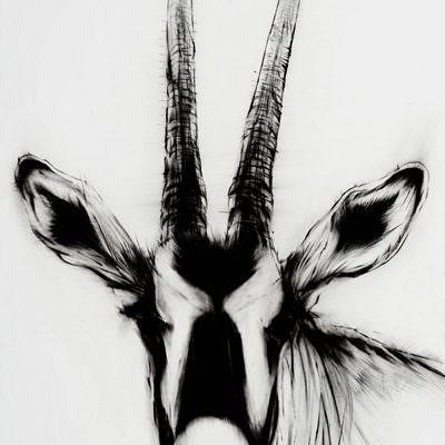 [A0037-0029] 13종의 우제류 Artiodactyla