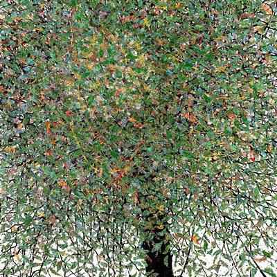 [A0051-0041] 변형된 욕망 - 버드나무 1