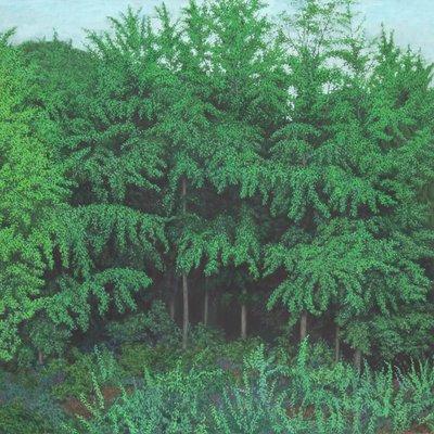 [A0065-0016] 숲