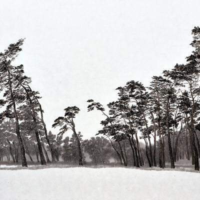 [A0074-0024] 허난설헌 생가 소나무숲
