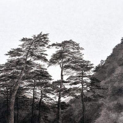 [A0074-0027] 보현사 松(송)