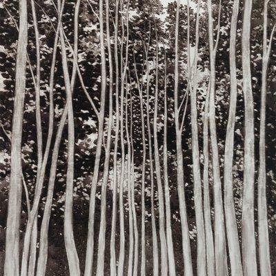 [A0074-0092] 하얀나무