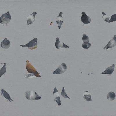 [A0090-0020] 비둘기 유형학적 패턴