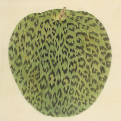 [A0116-0001] Leopard Apple