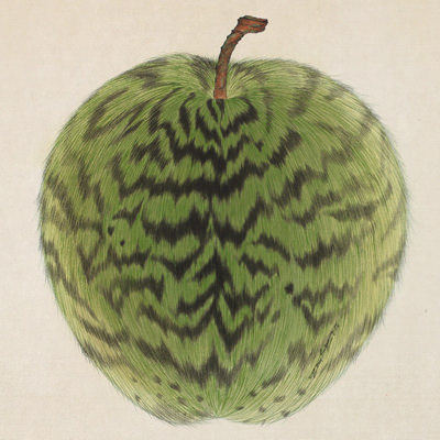 [A0116-0005] Leopard Apple -green