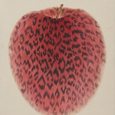 [A0116-0068] Leopard Apple-passion