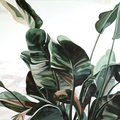 [A0131-0003] 큰 잎사귀 giant leaves