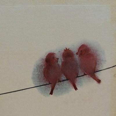 [A0141-0019] 전깃줄 위에 참새