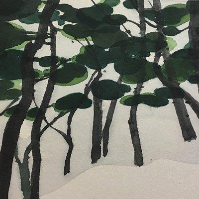 [A0141-0047] 소나무 숲