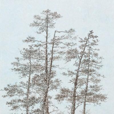 [A0162-0025] 자생하는 나무