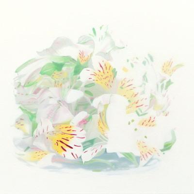 [A0163-0031] Alstroemeria