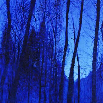 [A0179-0010] 사려니 숲 No-2