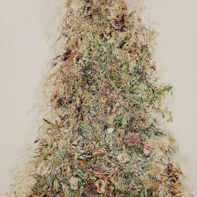 [A0208-0104] Dry Grass2