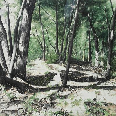 [A0232-0001] 숲 그림자