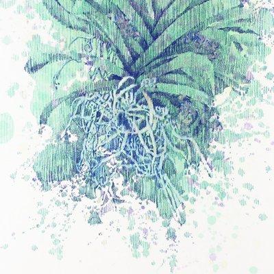 [A0269-0020] 밤산책11(에메랄드난초뿌리)