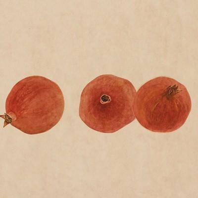 [A0277-0006] 석류