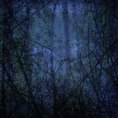 [A0285-0001] BlueForest
