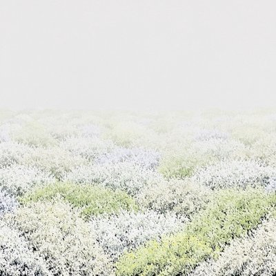 [A0347-0111] landscape -88