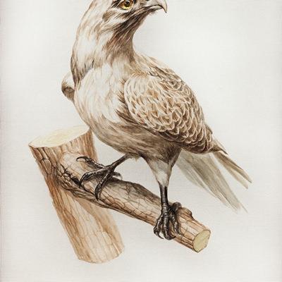 [A0356-0016] Still Life - Bird