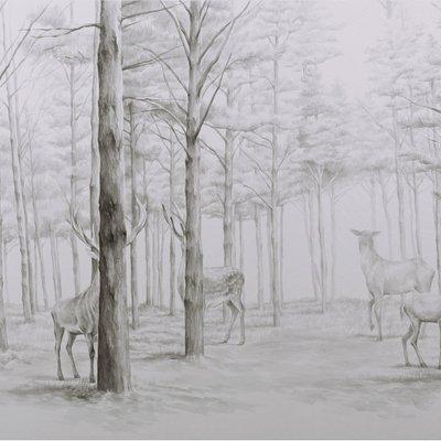 [A0356-0028] 침묵의 숲