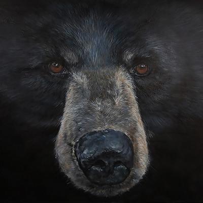 [A0361-0004] Black bear