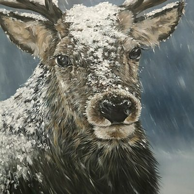 [A0361-0008] reindeer