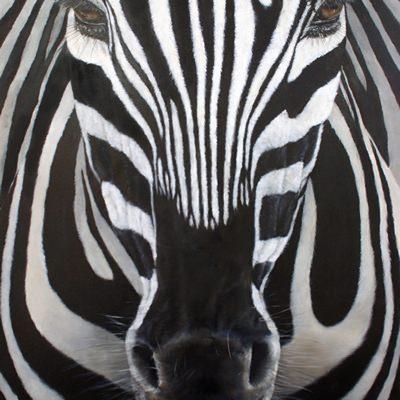 [A0361-0009] zebra