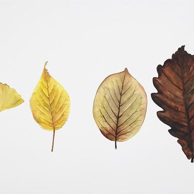 [A0441-0029] autumn