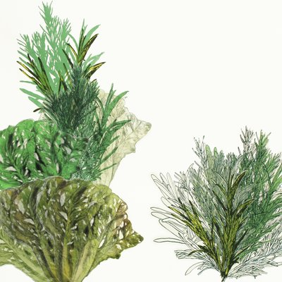 [A0542-0026] 식물기르기의 원칙 1