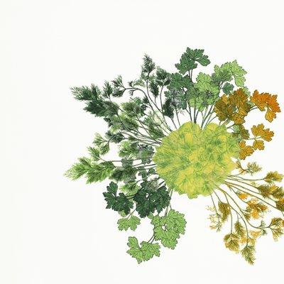 [A0542-0027] 식물기르기의 원칙 2