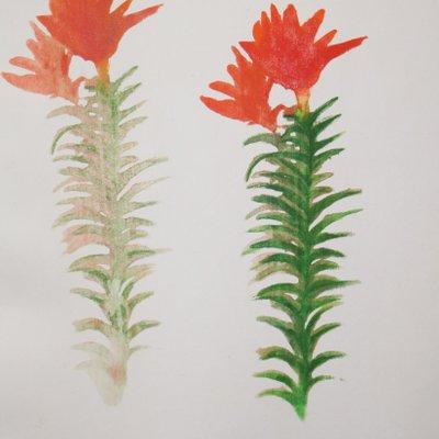 [A0542-0028] summer flower