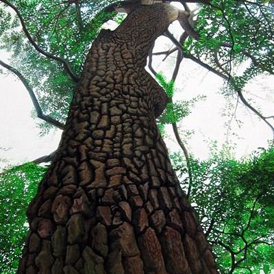 [A0547-0010] 치유의숲(제주녹나무)_No1