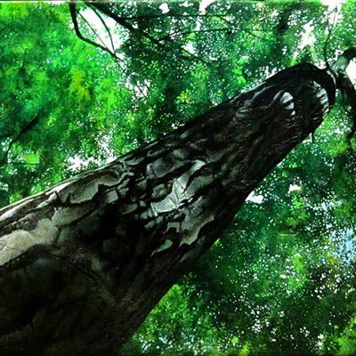 [A0547-0012] 제주의숲_No3 사려니숲속2