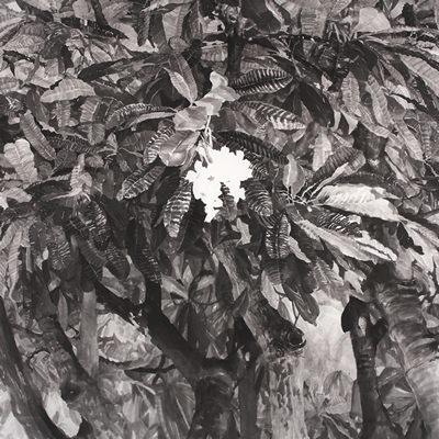 [A0556-0004] Plumeria
