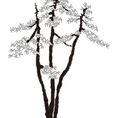 [A0592-0041] 더미 소나무 #22 (Pine Dummy #22)