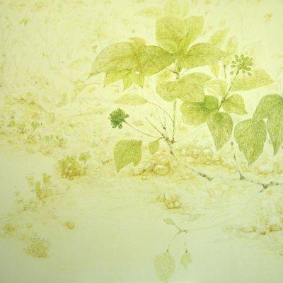 [A0610-0023] 황칠나무 18-1