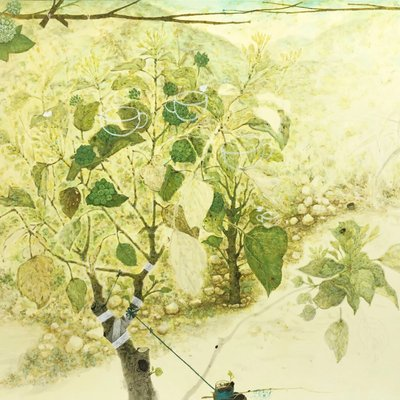 [A0610-0028] 황칠나무 15