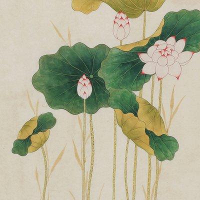 [A0650-0030] Lotuses