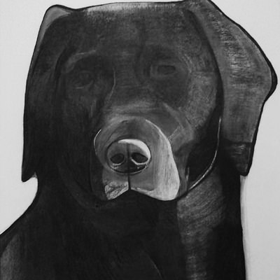 [A0709-0002] Black Dog Series_Labrador Retriever