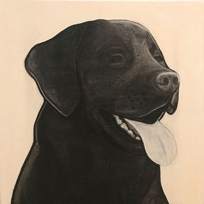 [A0709-0003] Black Dog Series_Labrador Retriever02