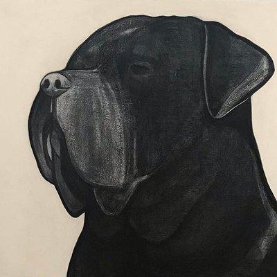 [A0709-0021] Black dog series_Cane Corso