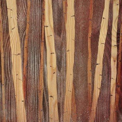 [A0712-0180] 자작나무