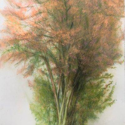[A0755-0022] 봄_나무