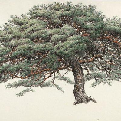 [A0834-0060] 송운(松韻, Pine tree energy)
