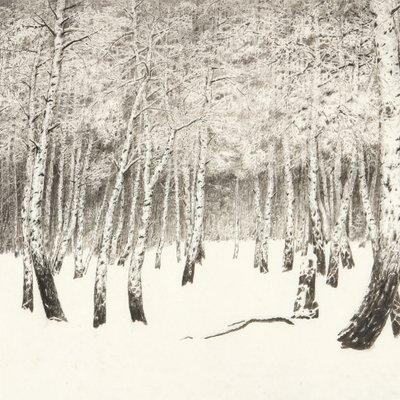 [A0834-0064] 자작나무(White birch)