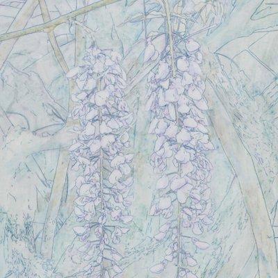 [A0835-0011] 등나무 꽃