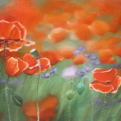 [A0865-0045] Natural Image(Poppy garden)